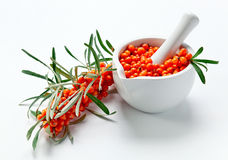Sea-buckthorn berries Royalty Free Stock Photo