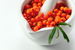 Sea-buckthorn berries Stock Photos