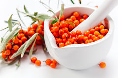 Sea-buckthorn berries Stock Images