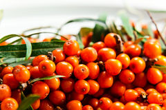 Sea-buckthorn berries Stock Images