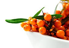Sea-buckthorn berries Stock Image