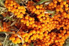 Sea-buckthorn berries Stock Photography
