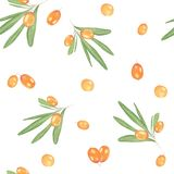 Sea buckthorn berries seamless pattern stock photography