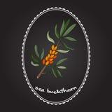 Sea buckthorn berries Stock Photo