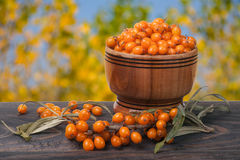 Sea-buckthorn berries in a wooden bowl on  table with blurred garden background Royalty Free Stock Photography