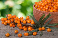 Sea-buckthorn berries in a wooden bowl on table with blurred garden background Stock Photography