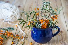 Sea-buckthorn in a blue mug. Branches of sea-buckthorn orange be. Rries Stock Photos