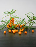 Sea buckthorn branch with berries Stock Photo