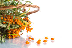 Sea-buckthorn Royalty Free Stock Photos