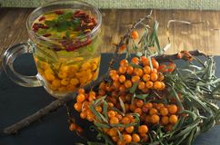 Sea-buckthorn bushes and a drink of sea-buckthorn mint and barberry is on a slate board.  Royalty Free Stock Photo