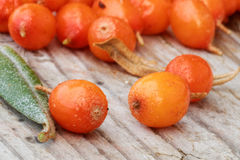 Sea buckthorn closeup Stock Photos
