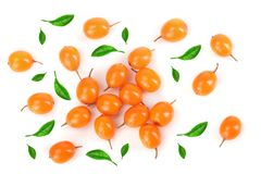 Sea buckthorn. Fresh ripe berry isolated on white background. Top view. Flat lay pattern stock image