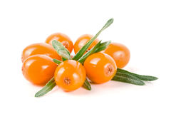 Sea buckthorn. Fresh ripe berry with leaves isolated on white background macro Stock Photography