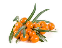 Sea buckthorn. Fresh ripe berry with leaves isolated on white background macro Royalty Free Stock Image