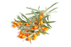 Sea buckthorn. Fresh ripe berry with leaves isolated on white background macro Stock Photos