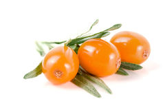 Sea buckthorn. Fresh ripe berry with leaves  on white background macro Royalty Free Stock Image