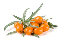 Sea buckthorn. Fresh ripe berry with leaves  on white background macro Stock Images
