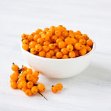 Sea buckthorn Stock Photography