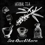 Sea buckthorn herbal tea. Chalk board set of  elements Royalty Free Stock Images