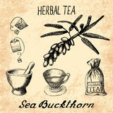 Sea buckthorn herbal tea. Set of  elements Royalty Free Stock Image