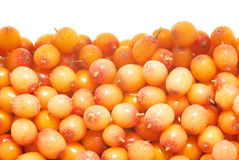 Sea-buckthorn (Hippophae rhamnoides). Background from frozen sea-buckthorn berries Royalty Free Stock Photography