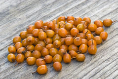 Sea buckthorn (Hippophae rhamnoides) barries. Stock Image