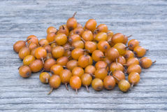 Sea buckthorn (Hippophae rhamnoides) barries. Royalty Free Stock Images