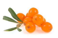 Sea buckthorn  isolated Stock Photos