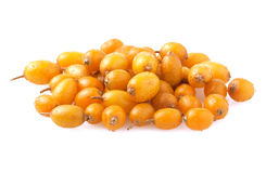 Sea buckthorn isolated on white Royalty Free Stock Image