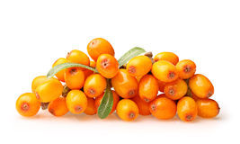 Sea buckthorn isolated Royalty Free Stock Image