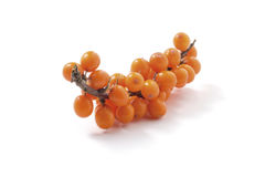 Sea-buckthorn isolated Royalty Free Stock Photos