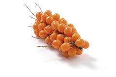Sea-buckthorn isolated Stock Images