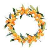 Sea buckthorn isolated on the white. Vector illustration in 3d style.  Stock Photography