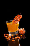 Sea buckthorn. Stock Photography