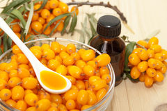 Sea buckthorn oil. The berries of sea buckthorn and sea buckthorn oil in a bottle Royalty Free Stock Photo