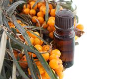 Sea buckthorn oil with berries on white Stock Photo