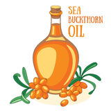 Sea buckthorn oil. Sea buckthorn branches and oil in the bottle stock illustration