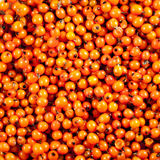 Orange berries background sea buckthorn Stock Photos