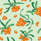 Sea buckthorn seamless pattern. Seamless pattern with juicy sea buckthorn. Vector illustration royalty free illustration