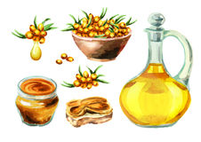 Sea buckthorn set with oil, jam and sandwich. Watercolor illustration Royalty Free Stock Image