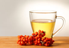 Sea buckthorn tea Royalty Free Stock Photography