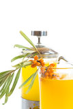 Sea buckthorn tea Royalty Free Stock Photos