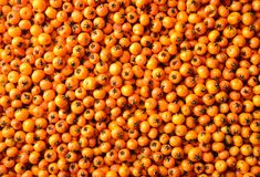 sea buckthorn texture Royalty Free Stock Images