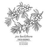Sea buckthorn vector set Royalty Free Stock Photo