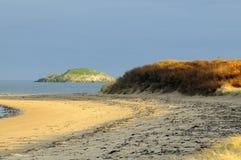 Sea-buckthorn, Yellowcraig, East Lothian, Scotland royalty free stock images