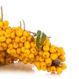 Sea-buckthorns berries stock photography
