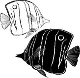 Sea butterfly fish Stock Photos