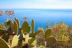 Sea with cactuses Stock Images
