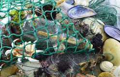 Sea catch Royalty Free Stock Photography