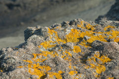 Sea cliff with dry lichen Royalty Free Stock Photo